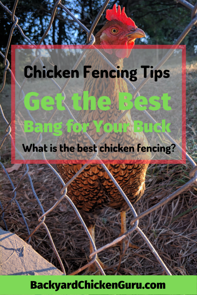 Picture of: Chicken Fencing Get The Best Bang For Your Buck Raising Backyard Chickens